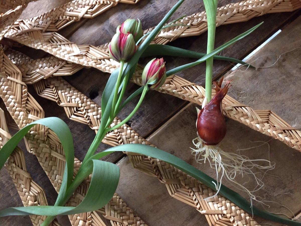 素材と話す – 花と暮らす 帽子と出かける –